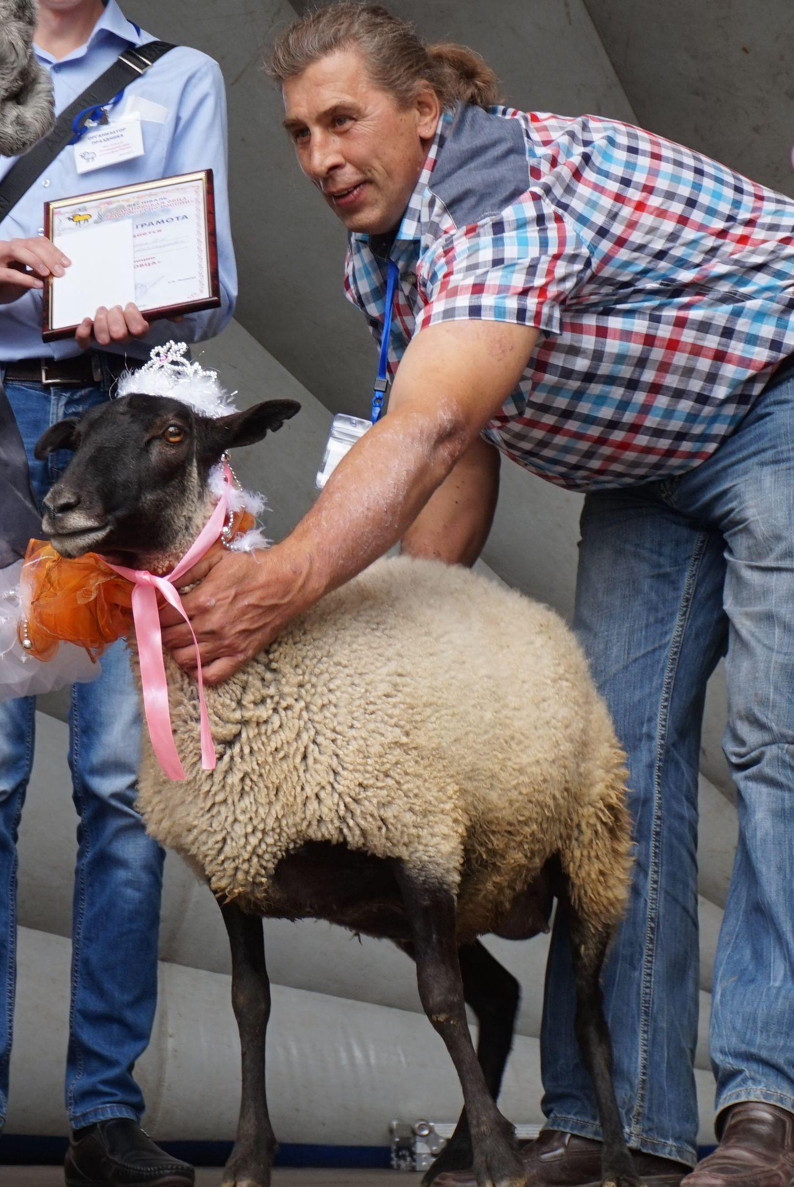 Романовская овца тутаев 2018 когда будет